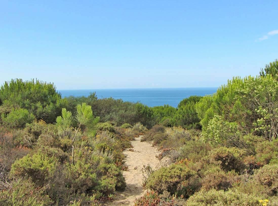 שביל הליכה, ים, חוף, צמחיה